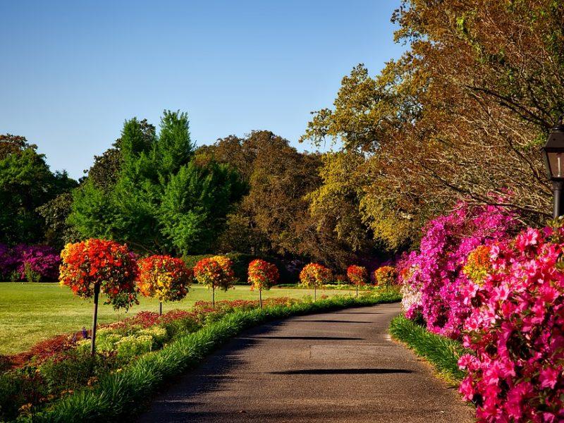 Ein Leitfaden für die Landschaftsgärtnerei